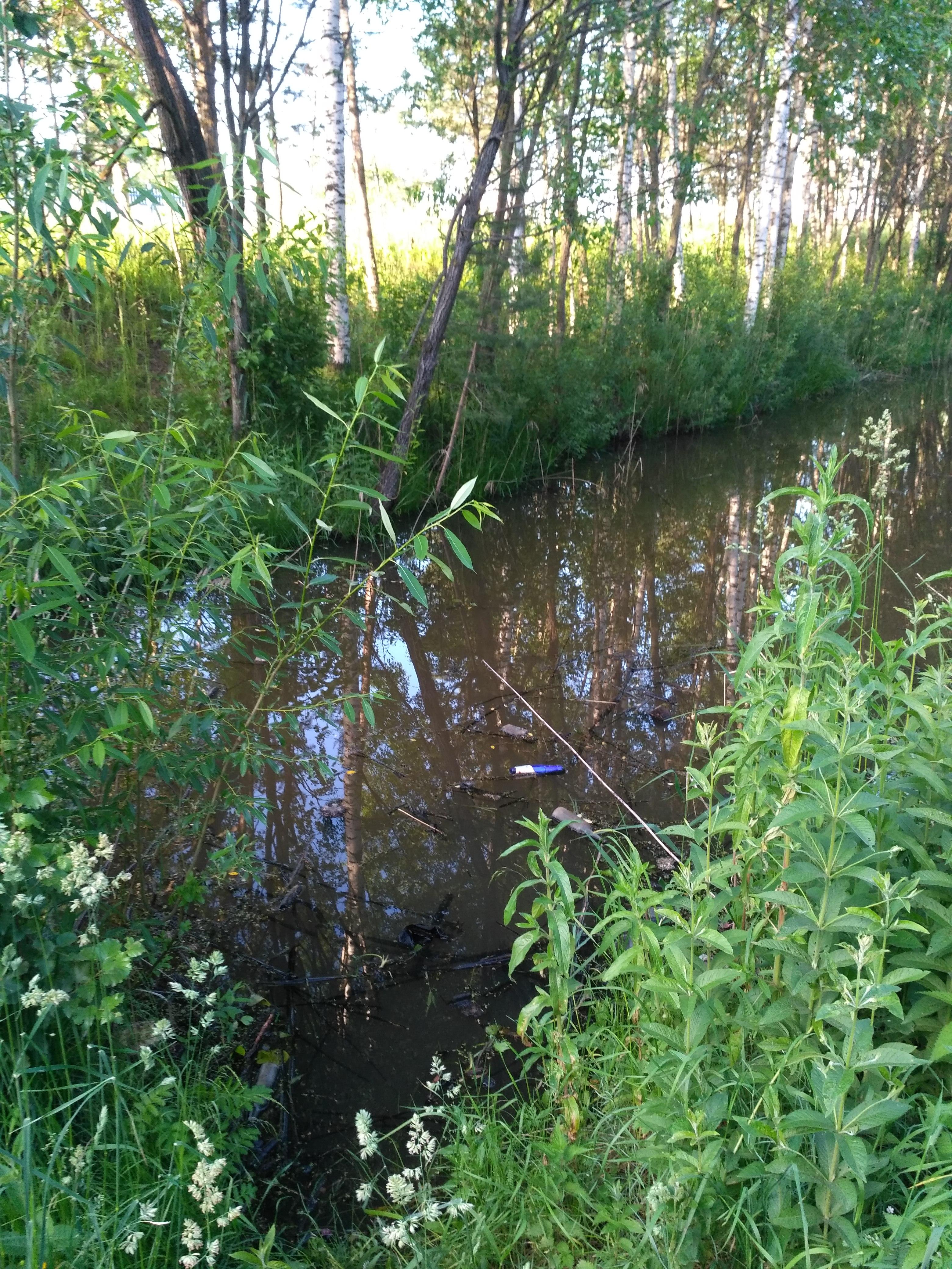 «С голубого ручейка начинается река…»
