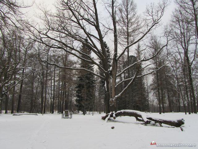 тайны зимы