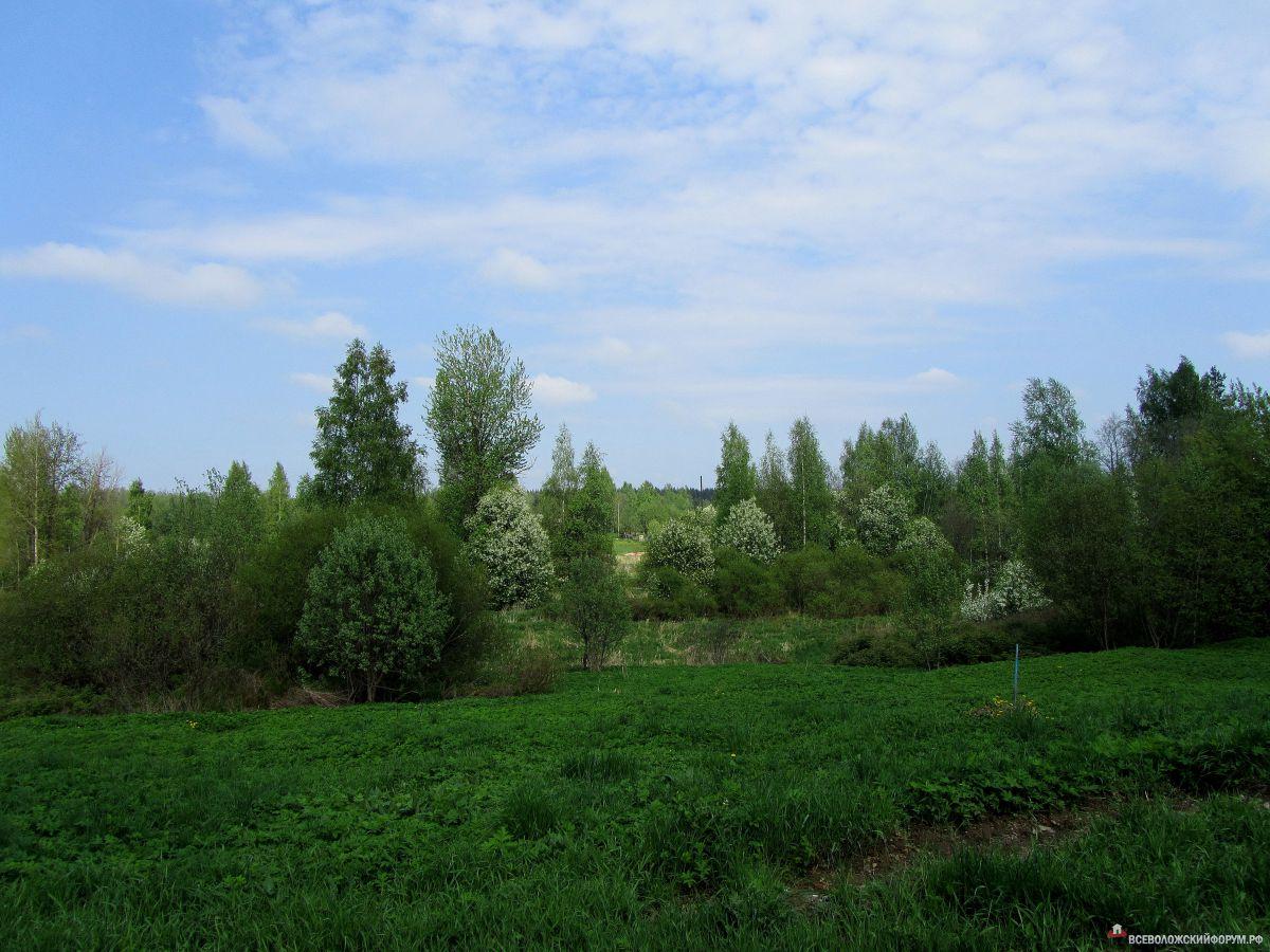 весна в Приютино