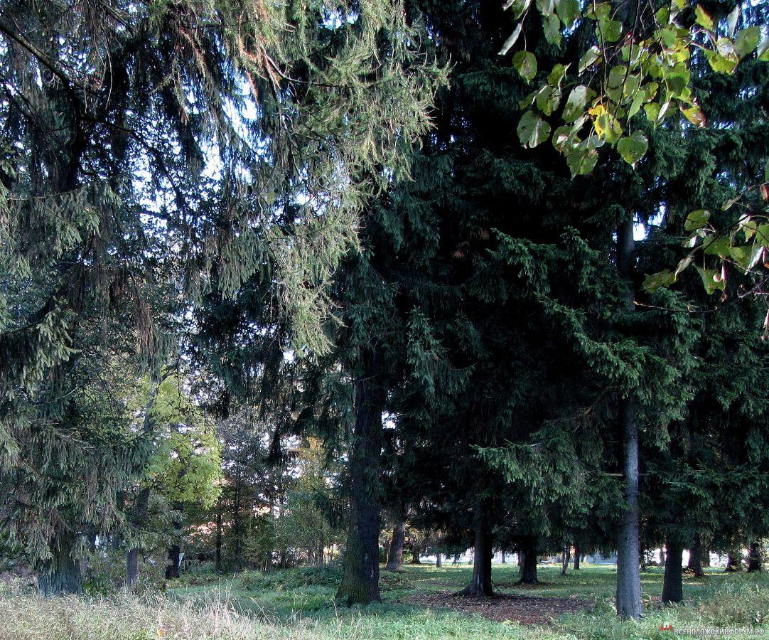 волшебство леса