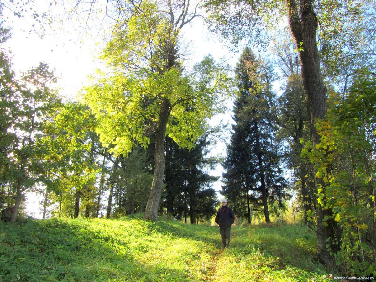 """""""лес стоит, ещё не тронутый осенним разноцветьем"""""""