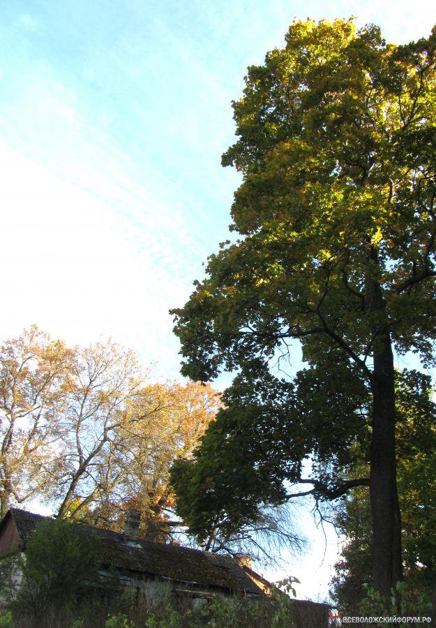 деревья, небо и...