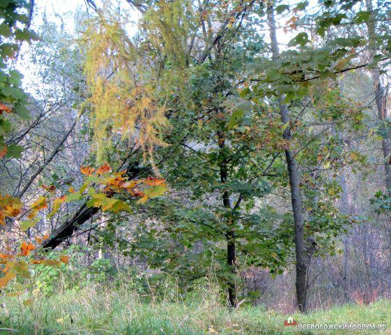 тайны леса в Приютино