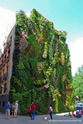 стена-цветник