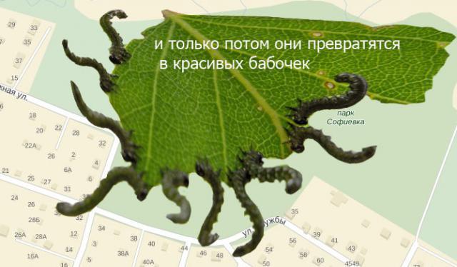 Прикрепленное изображение: законы природы.jpg
