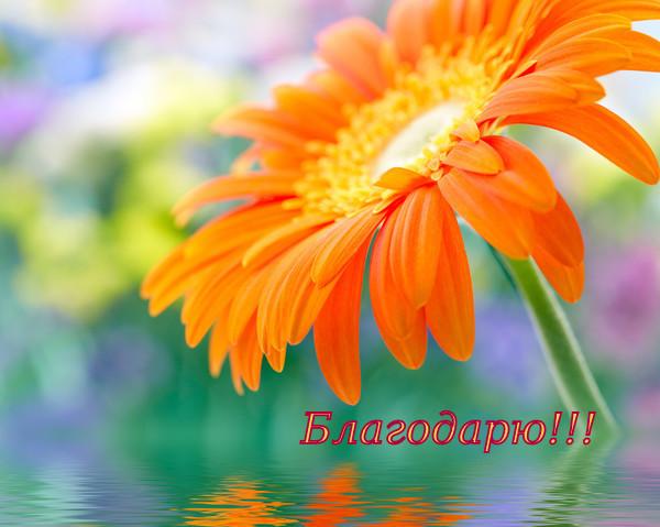 cvety_foto_172-004.jpg